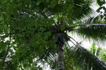 Magazyn Jesieni wieku. Kokos i olej kokosowy.