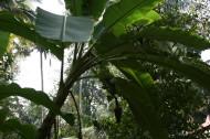 Banan – cenne źródło potasu